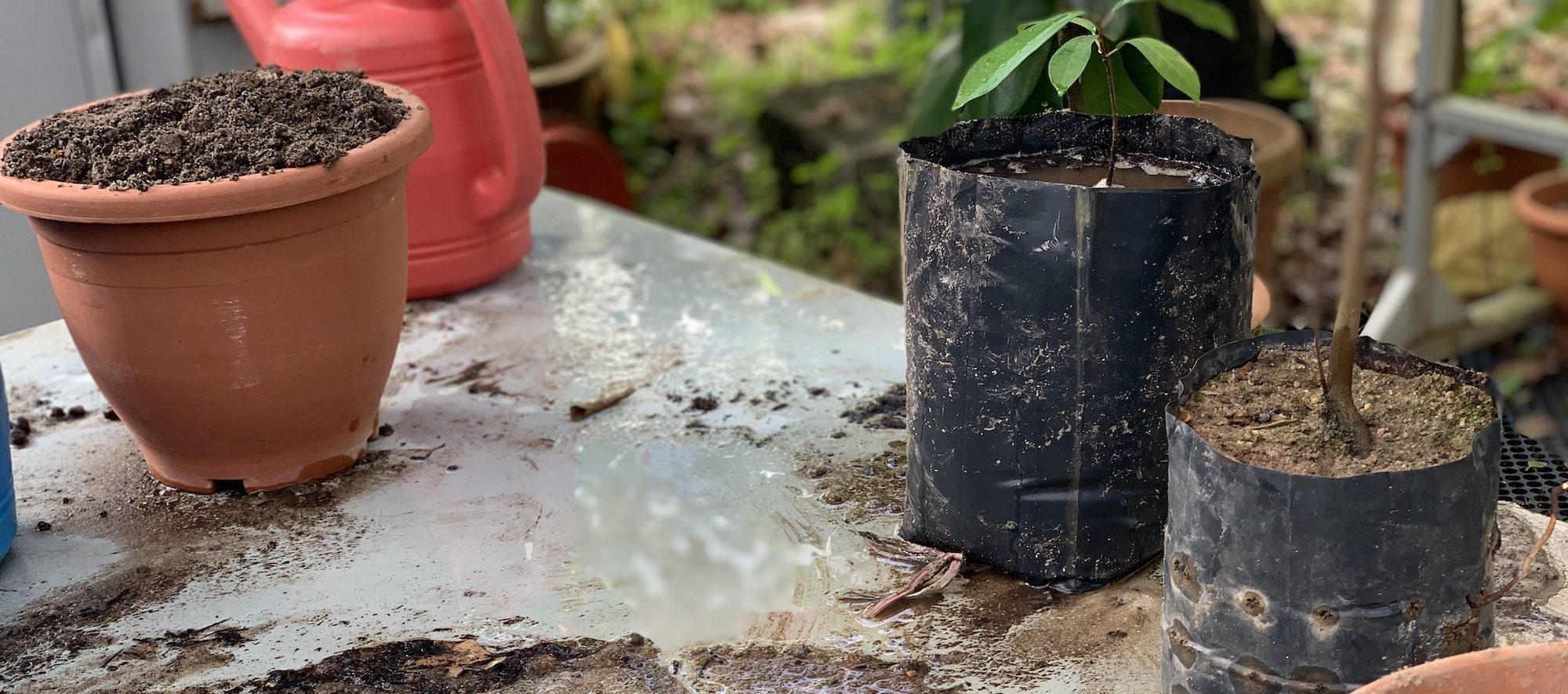 Feb 7 Rainforest Restoration Project