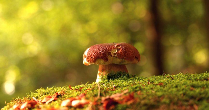 Analyse Mushrooms by Sylvia Plath